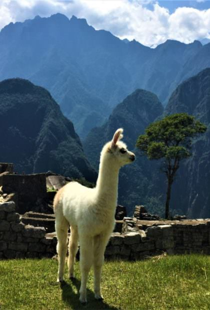 2 Day Tour to Machu Picchu